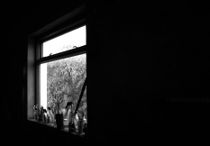 WINDOW AND BRUSHES